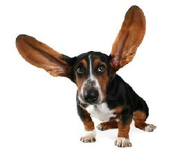 How Do You Test A Dog S Hearing